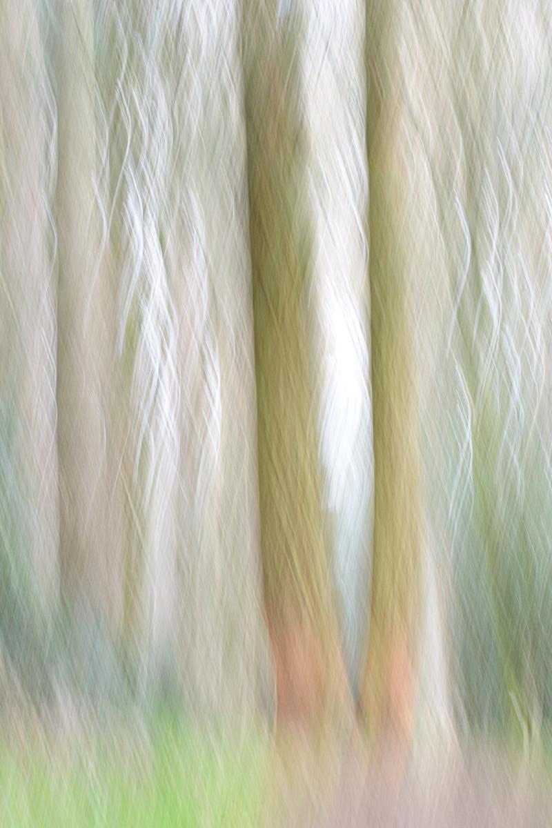 23-Les-esprits-de-la-forêt